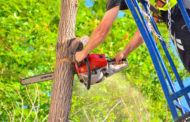 За неправильную обрезку деревьев будут наказывать в Алматы