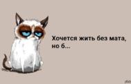 «Матерись по-казахски!» Писатель возмущен молодежью, использующей русские маты