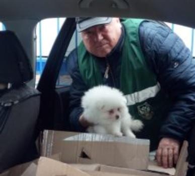Из России в Костанай пытались вывезти 18 породистых щенков