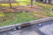 Мертвые голуби в парке Алматы напугали горожан