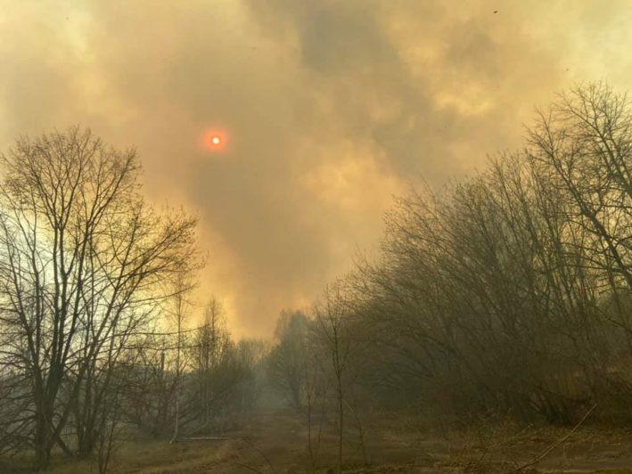 Дождь потушил чернобыльские леса