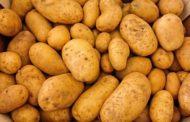 Почти 400 тонн тюменского картофеля отправили в Казахстан и Узбекистан