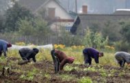 Дачники Костаная рискуют остаться без урожая в этом сезоне