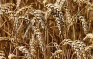 Только 35 процентов от минимальной стоимости гербицидов крестьянам может возместить бюджет