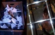 30 голубей не смогли пересечь границу в Челябинской области