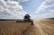 Как будет проводиться уборка урожая в условиях ограничений