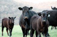 На 170 млн тенге мошенник обманул сельчан, обещая им породистый скот