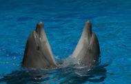 В Казахстане закроют дельфинарии