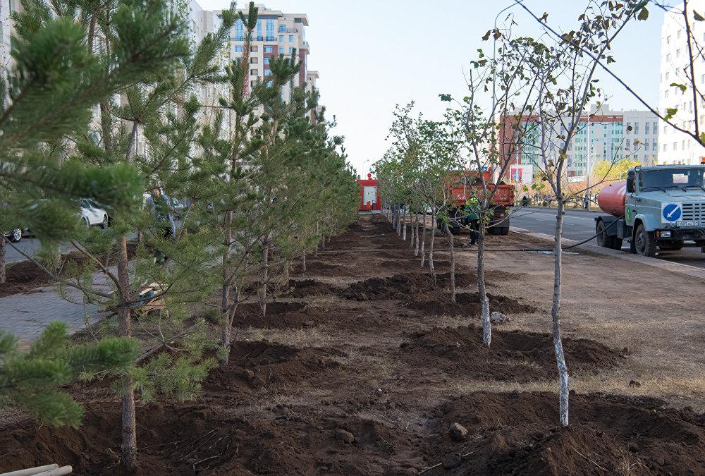 Десять вместо пяти: компенсацию за вырубленные деревья увеличили в Нур-Султане