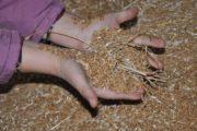 Из Челябинской области пытались вывезти 1,4 тысячи тонны зерна в Казахстан