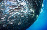 До 600 тыс. тонн рыбы в год можно выращивать в Казахстане