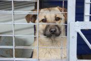 Жестокое убийство четырех собак расследует полиция Костанайской области