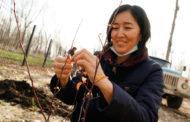 75 яблонь посадили волонтеры ОФ «Жанашыр бол» в Притобольском парке Костаная