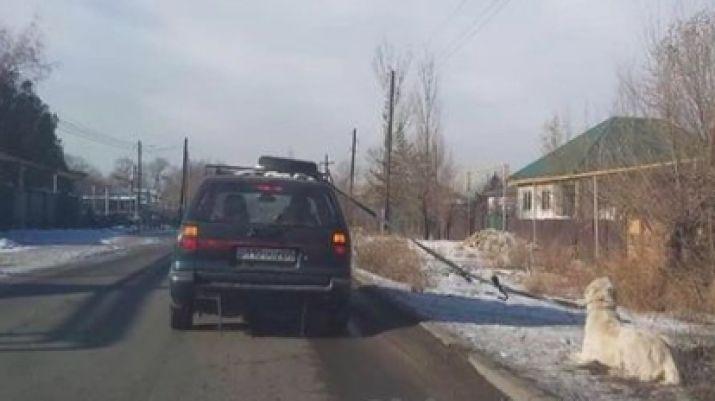 «Перевозил из вольера». Еще в одном регионе собаку протащили по дороге, привязав к машине