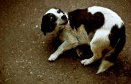 Безнаказанная жестокость: с чем связана агрессия детей к животным