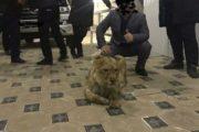 Львенок содержался в одной из гостиниц Шымкента для развлечений