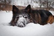 «Собака бывает кусачей и не только» — 100 часов общественных работ за кражу собак дали подучетному службы пробации Карасуского района