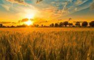 Назван состав Комиссии по земельной реформе в Казахстане