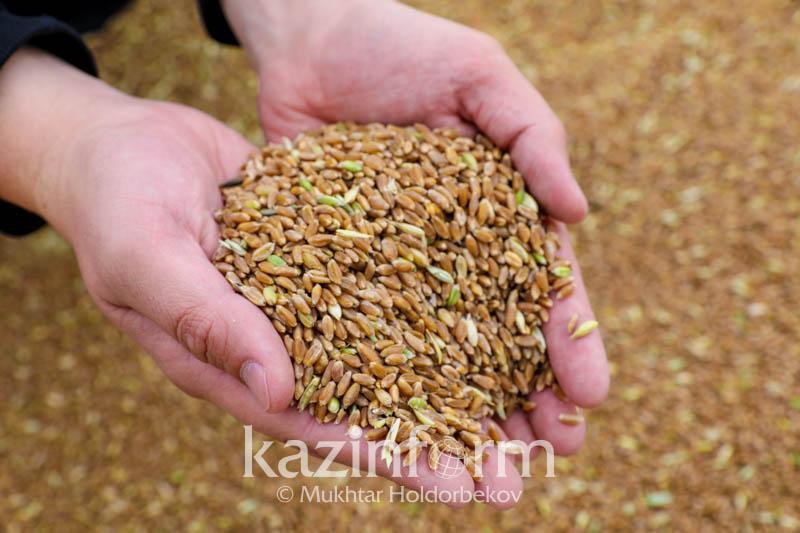 Экосистемы по производству и переработке зерна планируют создать в регионах