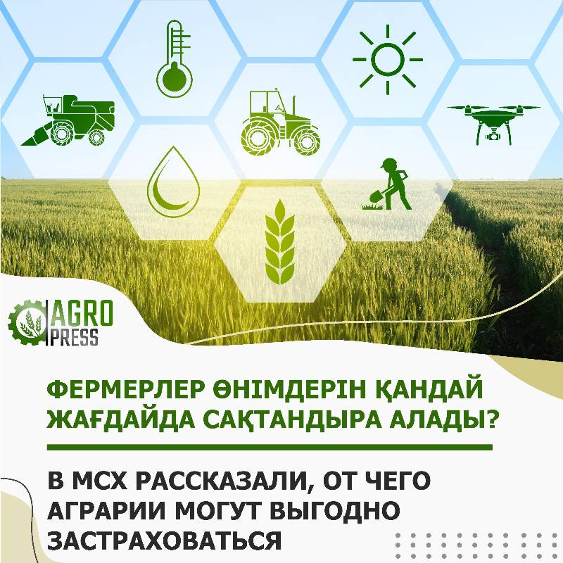 Минсельхоз РК: от чего аграрии могут выгодно застраховаться