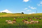 Более 3,5 тысячи пастбищных участков выданы с нарушением земельного законодательства