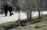 «За 8 лет высажено 728 деревьев. И ни одно не принялось!», — костанаец Леонид Дьячков произвел несложную арифметику