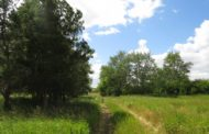 Запретить посещение лесов в жару планируют на севере Казахстана