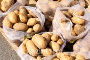 Зараженные семена картофеля и моркови пытались ввезти в Казахстан