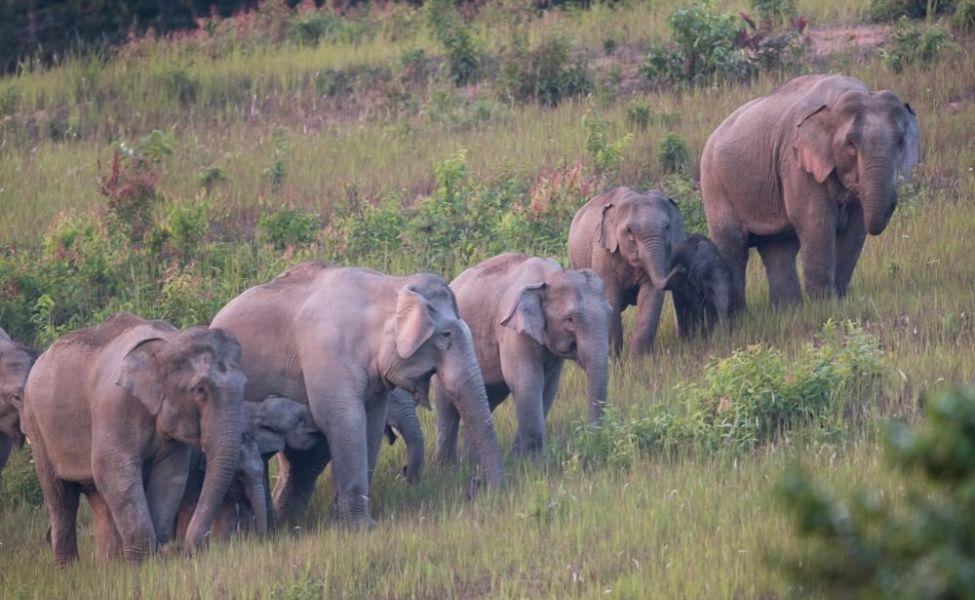 В Китае сбежавшие из заповедника слоны нанесли ущерб в миллион долларов