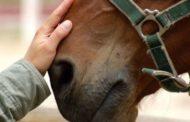 В Мангистауской области более 1000 лошадей погибли от голода