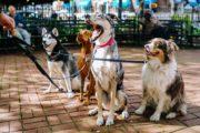 Казахстанцы на содержание собак тратят до миллиона тенге в год