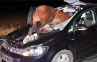 Три человека погибли в ЗКО при столкновении машины с лошадьми