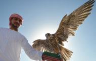 4 шейхам из ОАЭ и Катара разрешат охоту на 314 краснокнижных дроф-красоток в Казахстане