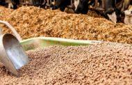 Токаев поручил наложить временный запрет на вывоз кормов