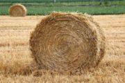 Казахстан планирует ввести запрет на вывоз сена и овса