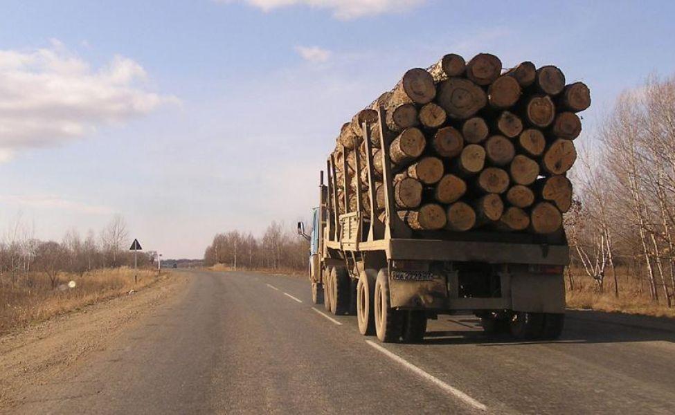 Алтайские таможенники пресекли контрабанду леса из России в Казахстан