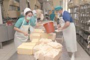 Казахам свой сыр не нужен: мы едим подделки из России