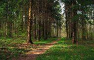 Журналисты ИА «ТоболИнфо» выйдут в рейд в леса