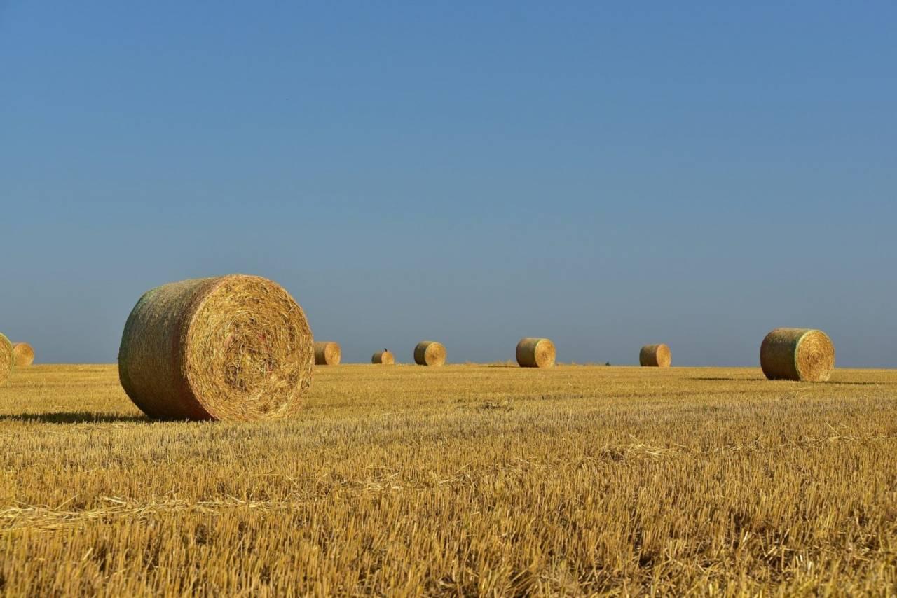 Мамин поручил выделить дополнительные средства для формирования запаса кормов и сена объемом 171 тыс тонн