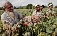 Афганистан без мака. Куда сместится мировой опиумный центр?
