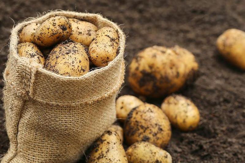 Сколько картофеля потребуется казахстанцам, рассчитали в Минсельхозе
