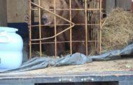 Медведица покусала 5-летнюю девочку на базе отдыха в Костанайской области