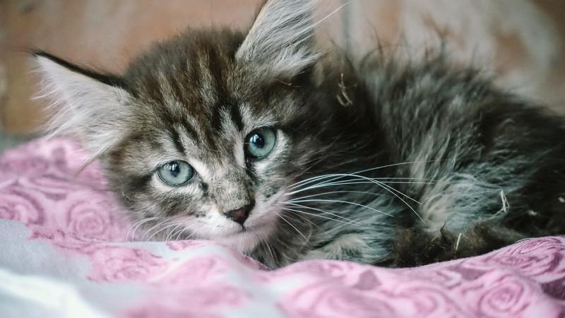 Россиянин убил соседа в отместку за котенка