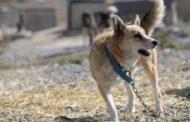В жестоком убийстве собак обвиняют соцработника из ЗКО