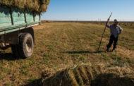 Труд фермеров оплачивается в четыре раза меньше госслужащих